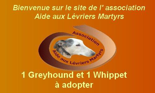 ASSOCIATION AIDE AUX LÉVRIERS MARTYRS